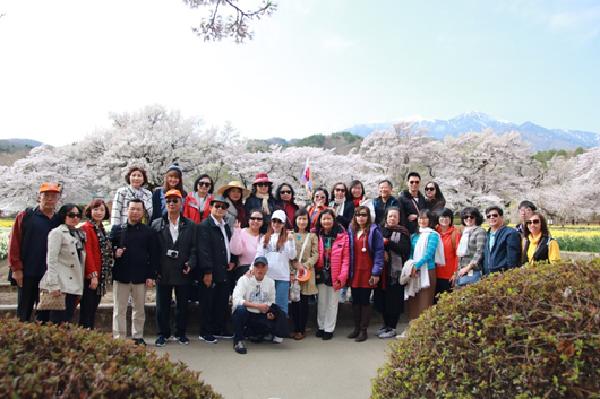 Hoa Anh Đào thi nhau khoe sắc vào mùa xuân tại Nhật Bản